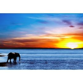 Óriáskép, Extra kép, vízpart, Elefánt a naplementében, 100x147