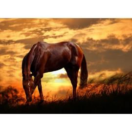 Óriáskép, Extra kép, Ló a naplementében 100x197