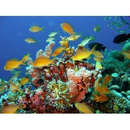 Óriáskép, Extra kép, Élet a tenger alatt I , halak 100x133