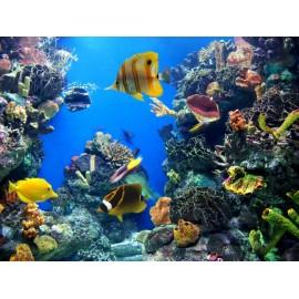 Óriáskép, Extra kép, Élet a tenger alatt II , halak 100x133