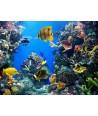 93x124cm, Extra nagy kép, Feszítőkeretes, Élet a tenger alatt II , halak