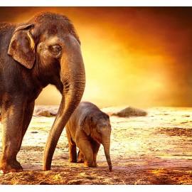 Óriáskép, Extra kép, Vándorló elefántok 100x107
