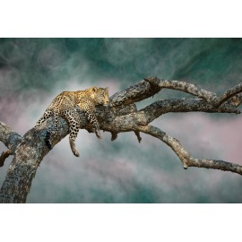 Óriáskép, Extra kép, Pihenő párduc 100x150
