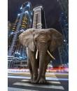 Óriáskép, Extra kép, Elefánt a városban 100x67