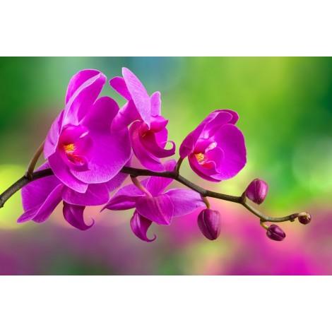 Óriáskép, Extra kép, Tavaszi virágzás 100x149