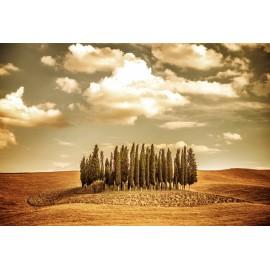 Óriáskép, Extra kép, Erdő a szántás közepén 100x148