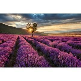 Óriáskép, Extra kép, Levendula mező 100x150