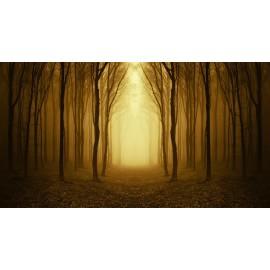 Óriáskép, Extra kép, Köd az erdőben 100x185