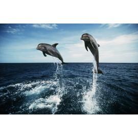 Óriáskép, Extra kép, Ugrándozó delfinek, tenger 100x152