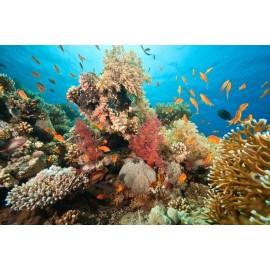 Óriáskép, Extra kép, Élet a tenger alatt III , halak 100x150